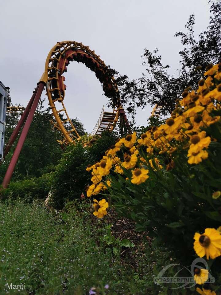 Boomerang im Park Bellewaerde Impressionen