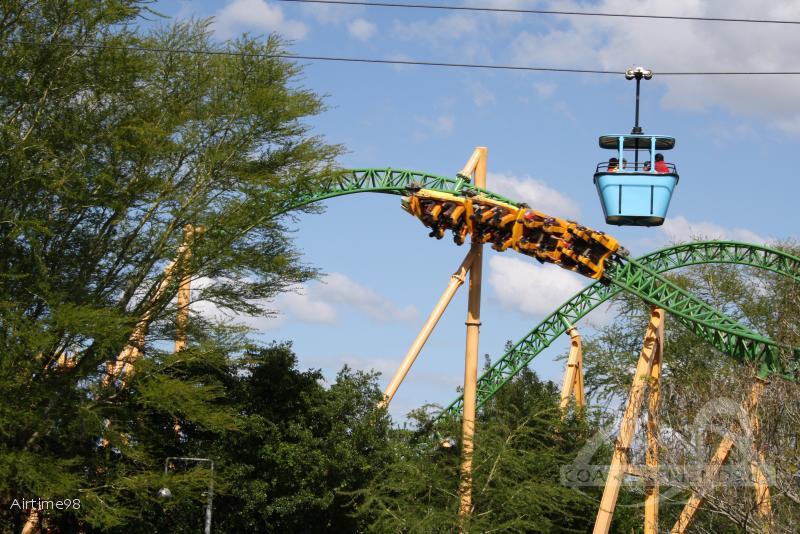Cheetah Hunt im Park Busch Gardens Tampa Impressionen
