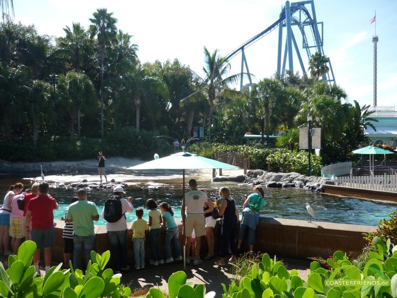 SeaWorld Orlando Impressionen