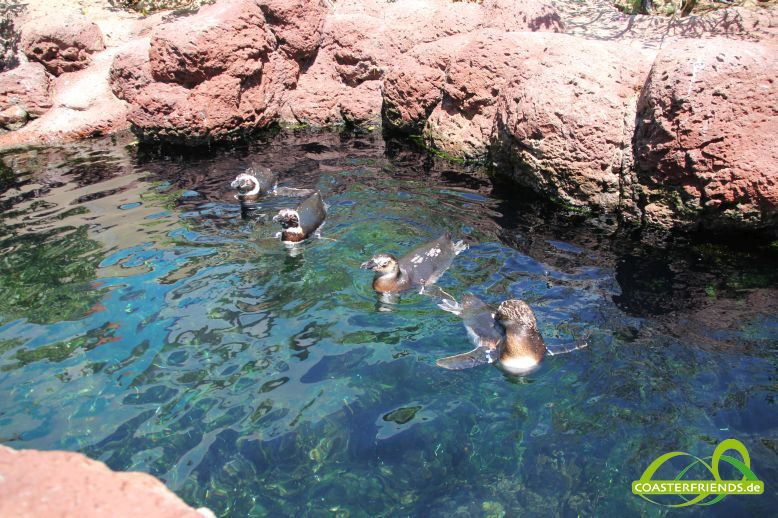 SeaWorld San Diego Impressionen