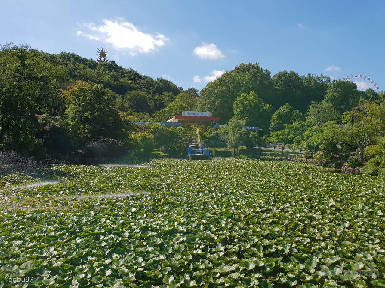 Japan Monkey Park Impressionen