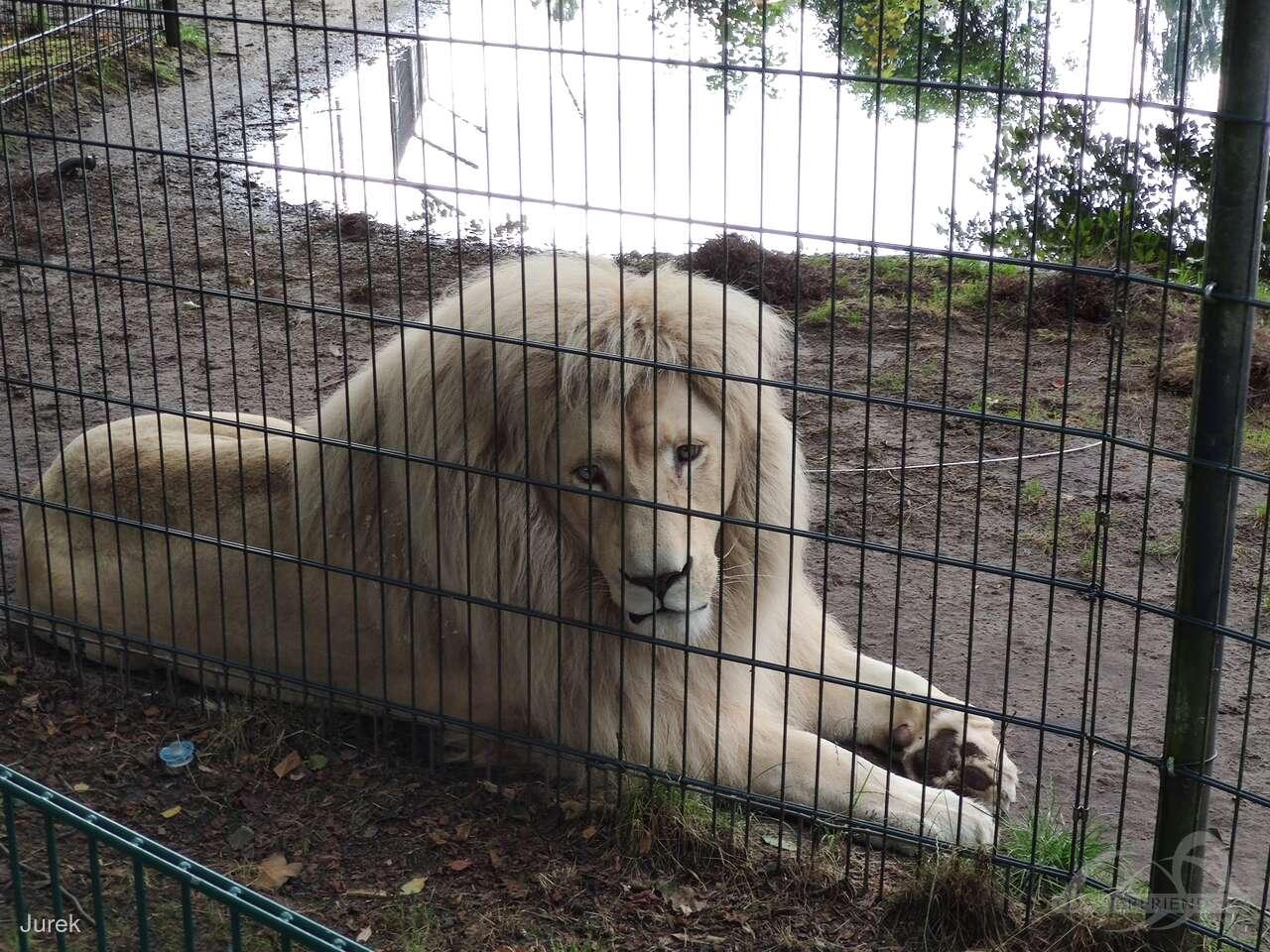 Tier- und Freizeitpark Thüle Impressionen